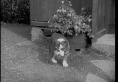 Bulldog Kennels, Film