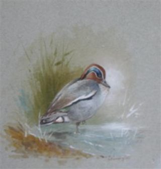 Watercolour painting of duck, a Male Teal by Gordon Beningfield | The Dacorum Heritage Trust