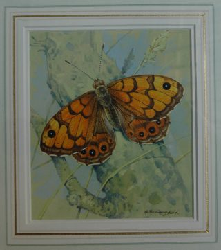 Watercolour of butterfly, signed by the artist | The Dacorum Heritage Trust