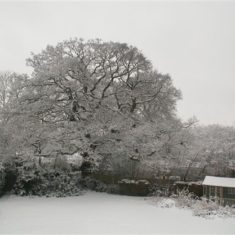 Snow at Felden garden 2009 | Ian Phipps