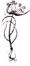 Garlic (Allium oleraceum)   Joan Allen