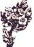 Hawthorn(Crataegus monogyna) | Joan Allen