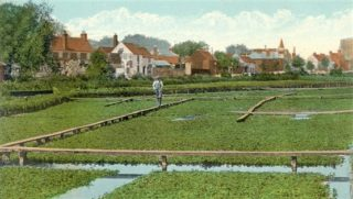 Watercress beds at Two Waters   Hertfordshire Archives and Local Studies